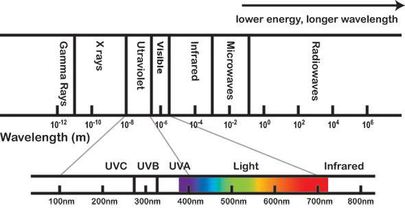 Tepro-The Price Of Ultraviolet Lamp